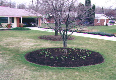 Pictures of Landscape Designs on herb garden under tree, flowers under tree, patio under tree, container garden under tree, woman under tree, wood under tree, decorating under tree, under the tree, lighting under tree, books under tree, home under tree, idea for plant around tree, perennial gardens under tree, plants under tree, roses under tree, annuals under tree, yoga under tree, buddha under tree, composting under tree, girl under tree,