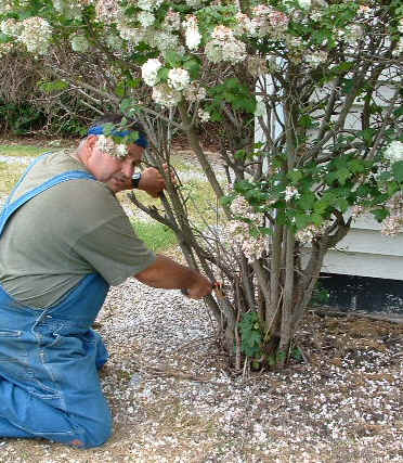 Tree Stump Removal Instructions